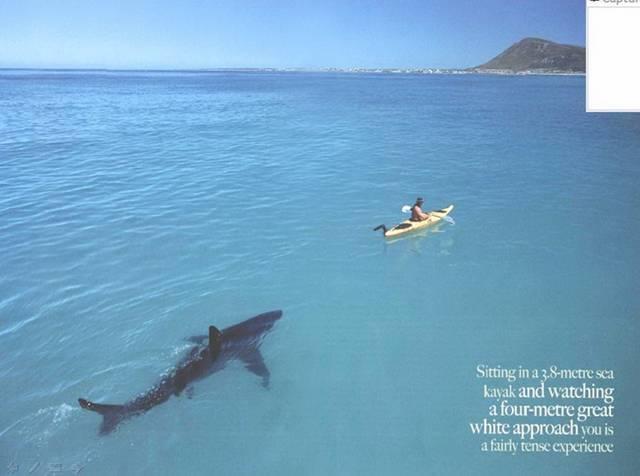 حکایت فوق العاده زیبا و حیرت آور بین یک انسان و یکی از مخوف ترین جانداران